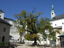 Austria - Salzburg - Hohensalzburg Fortress-007