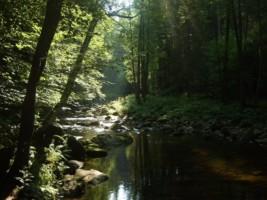 GermanyBavarianForest2008 (1)