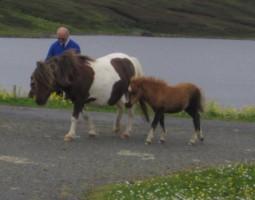 ShetlandIslandsLandscape2006 (4)